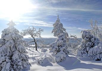 Winterwald im Renchtal