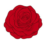 beautiful red rose isolated in graphic style