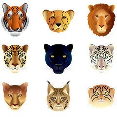 Big cats heads vector set