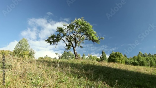 Tree on the green grass hill with cloud