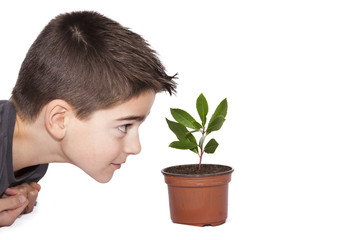 young man looking at young plant growing in a container