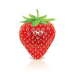 Strawberry isolated on white vector