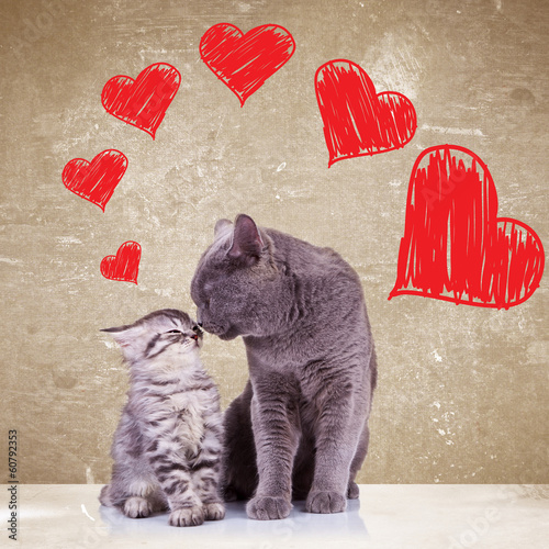 cats kissing on valentines day