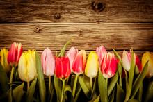 Belle tulipe frais frontière sur bois rustique