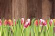 Obrazy na płótnie, fototapety, zdjęcia, fotoobrazy drukowane : Tulpen