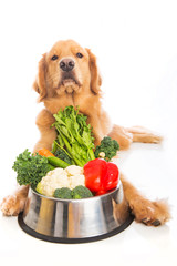 Golden Retriever Food