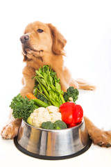 A golden retriever dog turning his head away from vegetables