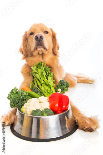 Golden Retriever Food