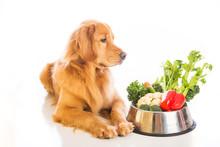 "Постер, картина, фотообои ""Golden Retriever Dog Food"""