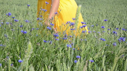 Turn view of girl in dress hand touch cornflower wheat plants