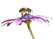 Obrazy na płótnie, fototapety, zdjęcia, fotoobrazy drukowane : abeja en la flor sobre fondo blanco