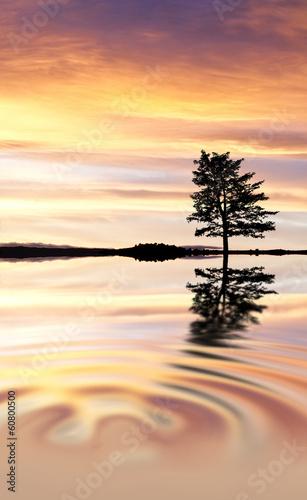 Fotobehang Een Hoekje om te Dromen el arbol que hablaba con el agua