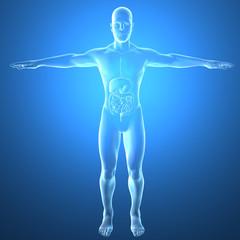 Uomo intestino raggi x apparato digerente