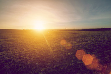 sunset field