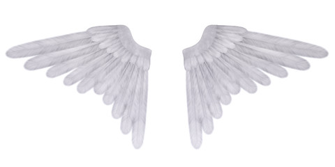 Angel's wings isolated on the white background
