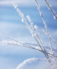White snow winter reeds