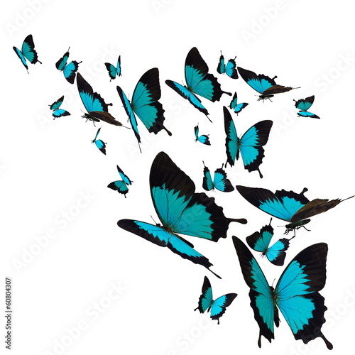 group of butterflies, isolated on white background