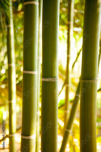 Leinwanddruck Bild Bamboo cane field with selective focus