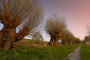 Landschaft mit alten Kopfweiden in Mecklenburg