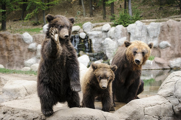 Kamchatka bear