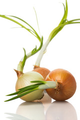 onion sprouts on white background