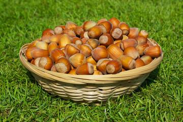 Basket full of hazelnuts