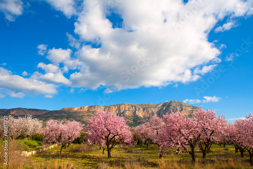Leinwanddruck Bild Mongo in Denia Javea in spring with almond tree flowers