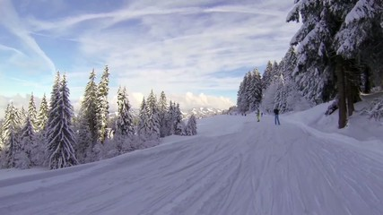 Skiing between fir trees