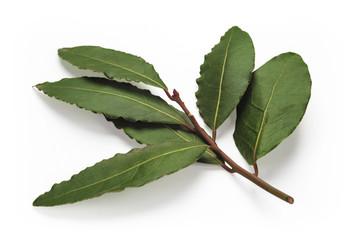 Fresh Bay Leaves branch