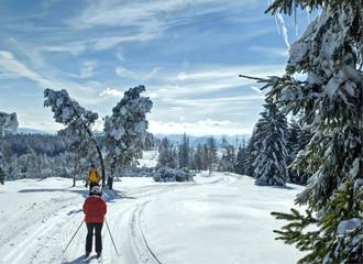 Ski - Langlauf im Schwarzwald