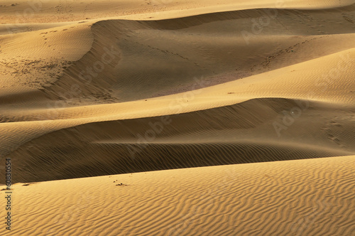 Thar desert in India