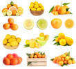 Citrus collage isolated on white