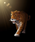 Jaguar, wild cat Panther by night. Vector illustration