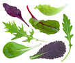 Collage of fresh herbs on white background