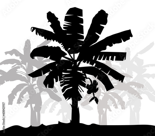 Banana tree silhouette- vector