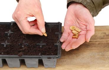 Hands planting