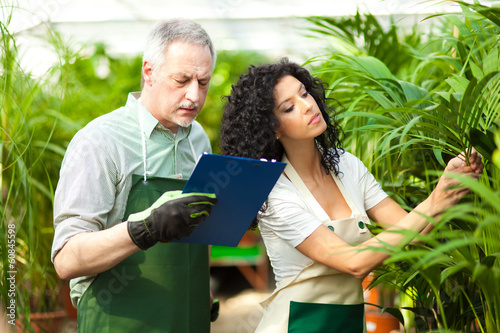 Workers examining plants in a greenhouse