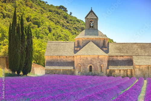 Abbey of Senanque blooming lavender flowers. Gordes, Luberon, Pr - 60846913