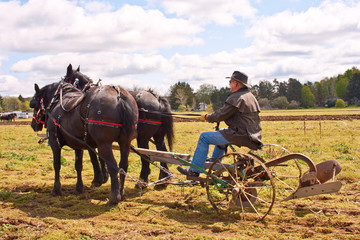 Man Plowing The Old Fashioned Way