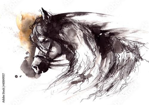 horse - 60849157