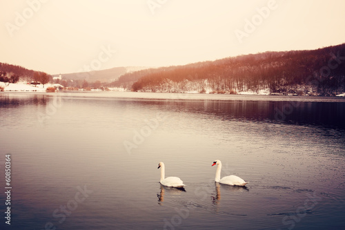 Foto op Canvas Zwaan Swan on winter lake