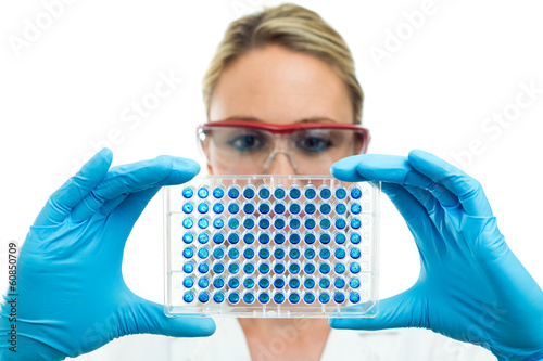 researcher examining microplate