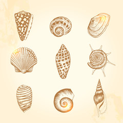 Set of vector vintage seashells.