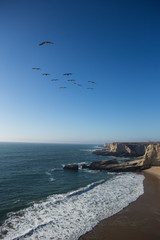 Pelicans flying over a beach with cliffs