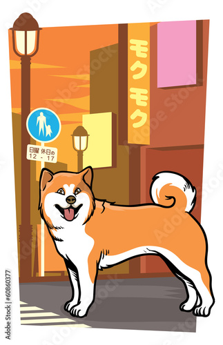 japanese dog on the city street