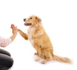 Hundeerziehung: Give me 5