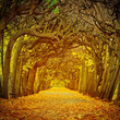 Path in beautiful park at autumn