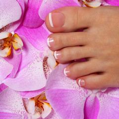Pedicure with pink orchid flower. Beautiful