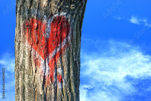 red heart on tree bark