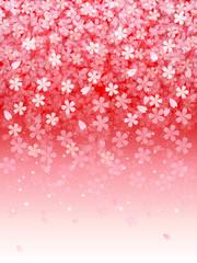 桜 さくら 背景